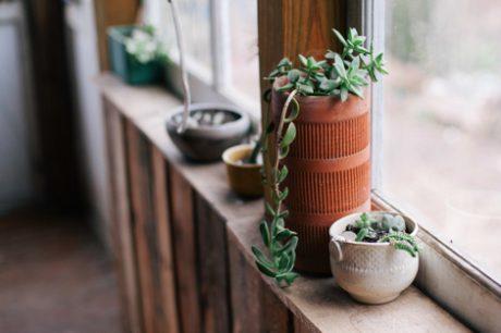 wood-light-vintage-plants